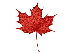 odd-maple-leaf.jpg